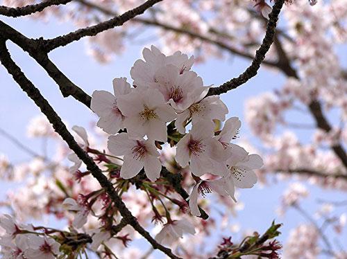 flower-thumbnail