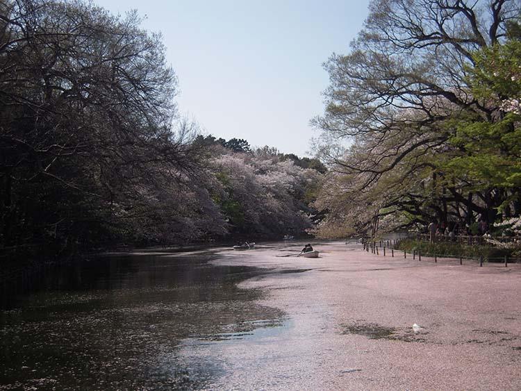 井之頭公園2