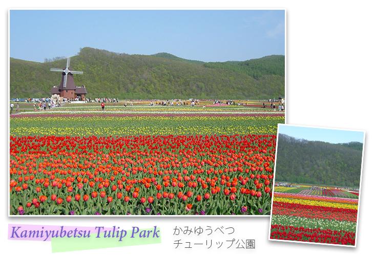 Kamiyubetsu Tulip Park