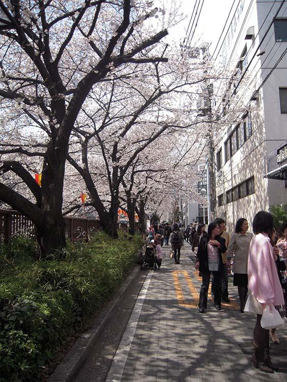 in_tw_sakura_06