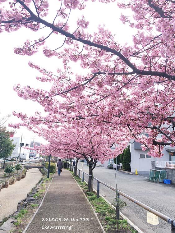江川小溪遊步道1