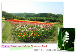 Takino Suzuran Hillside National Park